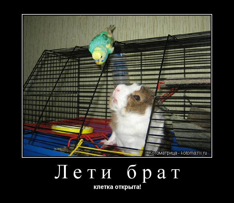 Котоматрица: Лети брат клетка открыта!
