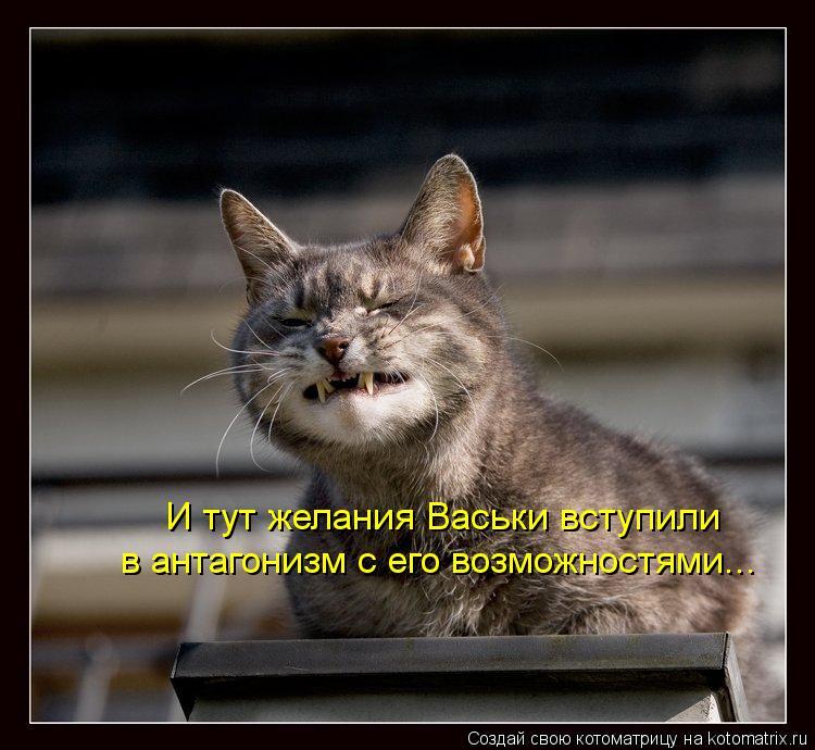 Котоматрица: И тут желания Васьки вступили в антагонизм с его возможностями...
