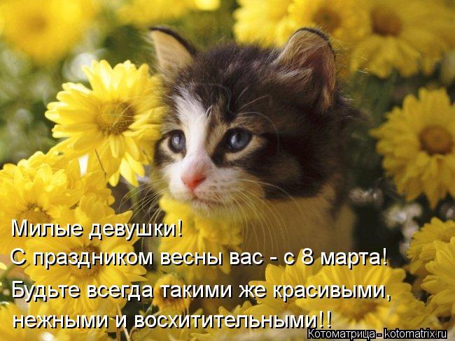 Котоматрица: Милые девушки!  С праздником весны вас - с 8 марта! Будьте всегда такими же красивыми,  нежными и восхитительными!!
