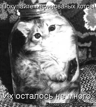 Котоматрица: Покупайте маринованых котов! Их осталось не много.