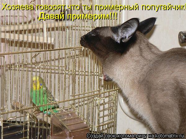 Котоматрица: Хозяева говорят,что ты примерный попугайчик! Давай примерим!!!