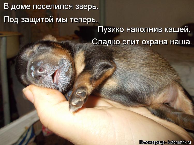 Котоматрица: В доме поселился зверь. Под защитой мы теперь. Пузико наполнив кашей, Сладко спит охрана наша.