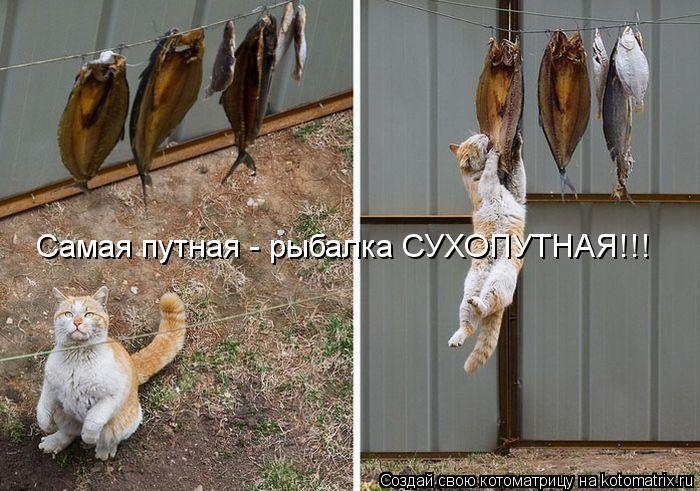 Котоматрица: Самая путная - рыбалка СУХОПУТНАЯ!!!