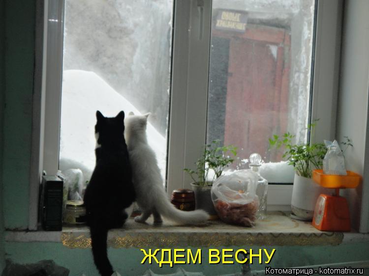 http://kotomatrix.ru/images/lolz/2013/03/09/kotomatritsa_jL.jpg
