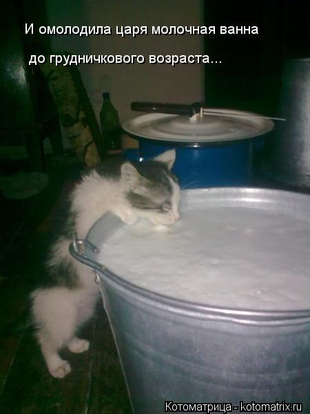 Котоматрица: И омолодила царя молочная ванна  до грудничкового возраста...