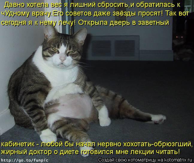 Котоматрица: Давно хотела вес я лишний сбросить,и обратилась к  чУдному врачу.Его советов даже звёзды просят! Так вот сегодня я к нему лечу! Открыла дверь