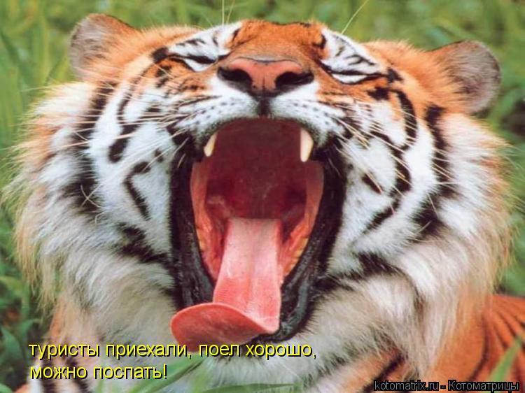 Котоматрица: туристы приехали, поел хорошо, можно поспать!
