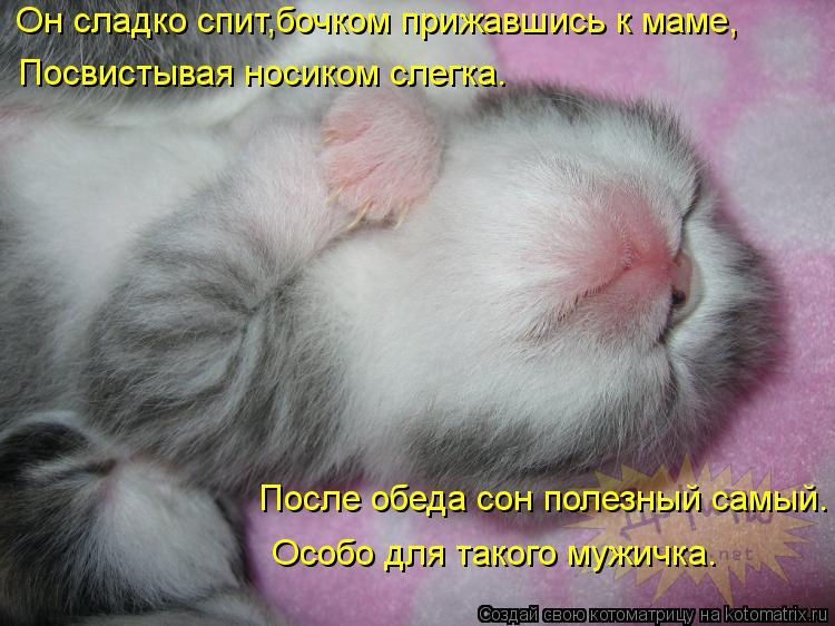 Котоматрица: Он сладко спит,бочком прижавшись к маме, Посвистывая носиком слегка. После обеда сон полезный самый. Особо для такого мужичка.