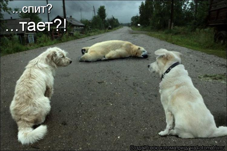 Котоматрица: ...спит? ...тает?!