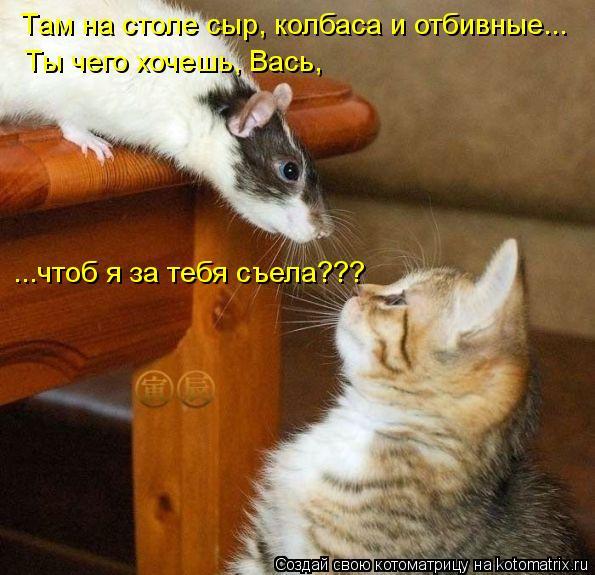 Котоматрица: Там на столе сыр, колбаса и отбивные... Ты чего хочешь, Вась, ...чтоб я за тебя съела???