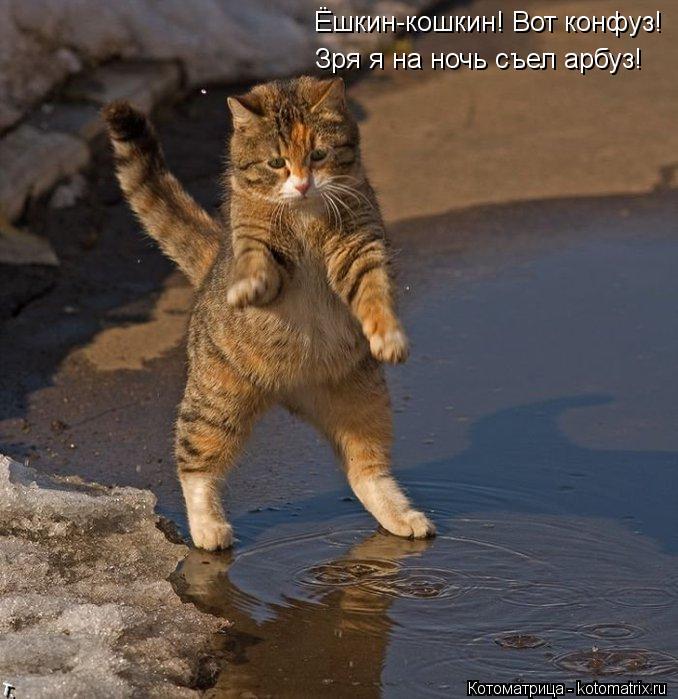 Котоматрица: Ёшкин-кошкин! Вот конфуз! Зря я на ночь съел арбуз!