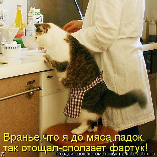 Котоматрица: Вранье,что я до мяса падок, так отощал-сползает фартук!