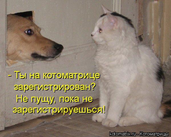 Котоматрица: - Ты на котоматрице зарегистрирован? Не пущу, пока не зарегистрируешься!