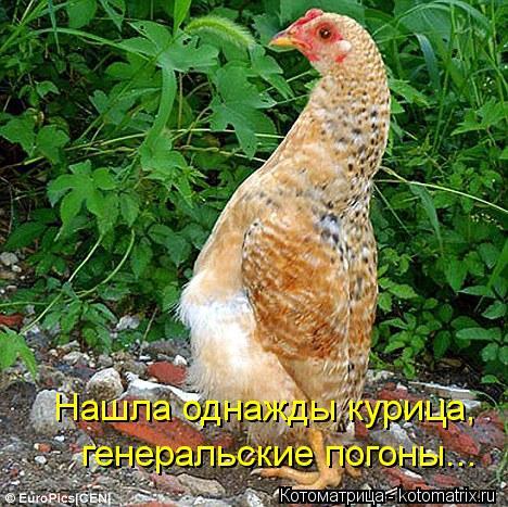 Котоматрица: Нашла однажды курица,  генеральские погоны...