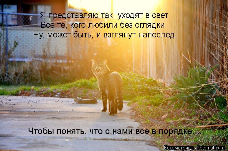 Котоматрица: Я представляю так: уходят в свет Все те, кого любили без оглядки Ну, может быть, и взглянут напослед Чтобы понять, что с нами все в порядке....