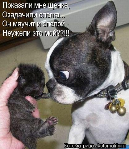 Котоматрица: Показали мне щенка, Озадачили слегка... Он мяучит и слепой - Неужели это мой??!!!