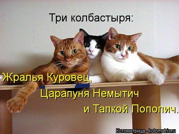 Котоматрица: Три колбастыря: Жралья Куровец,  Царапуня Немытич и Тапкой Попопич.