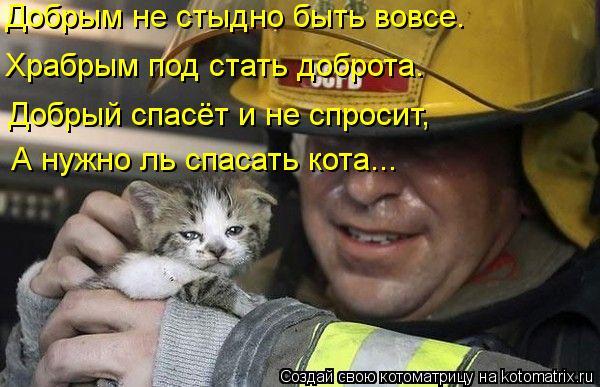 Котоматрица: Добрым не стыдно быть вовсе. Храбрым под стать доброта. Добрый спасёт и не спросит, А нужно ль спасать кота...