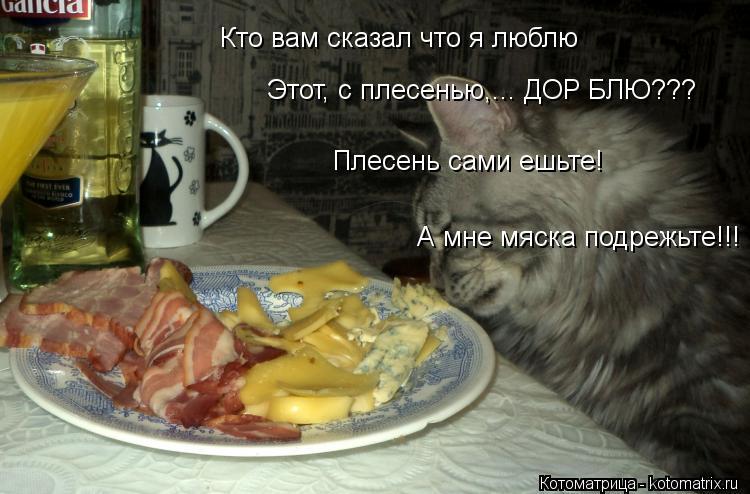 Котоматрица: Кто вам сказал что я люблю Этот, с плесенью,... ДОР БЛЮ??? Плесень сами ешьте! А мне мяска подрежьте!!!