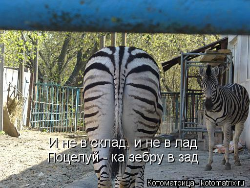 Котоматрица: И не в склад, и не в лад Поцелуй - ка зебру в зад