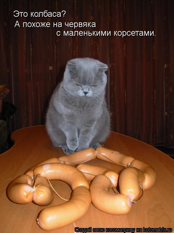 Котоматрица: Это колбаса? А похоже на червяка с маленькими корсетами.