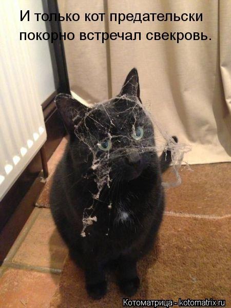 Котоматрица: И только кот предательски покорно встречал свекровь.
