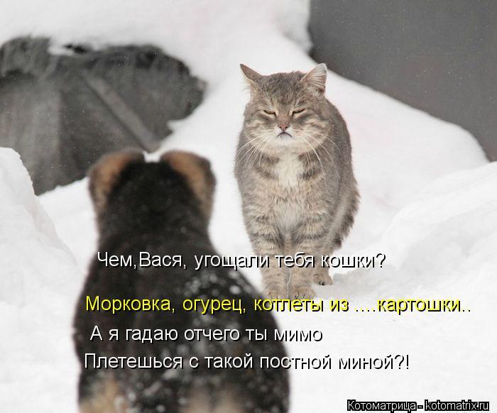Котоматрица: Морковка, огурец, котлеты из ....картошки.. Чем,Вася, угощали тебя кошки? Плетешься с такой постной миной?! А я гадаю отчего ты мимо