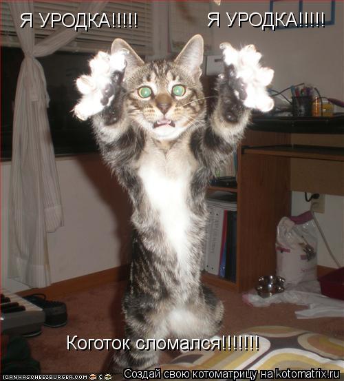 Котоматрица: Я УРОДКА!!!!! Я УРОДКА!!!!! Коготок сломался!!!!!!!