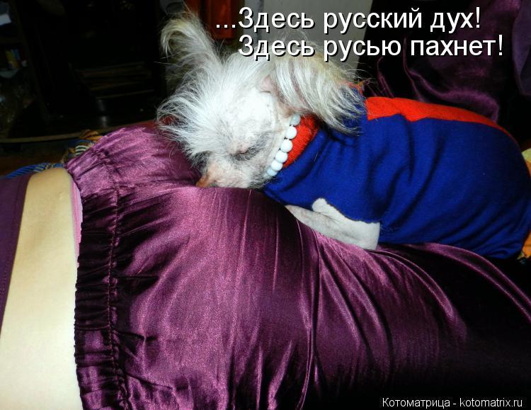 Котоматрица: ...Здесь русский дух! Здесь русью пахнет!