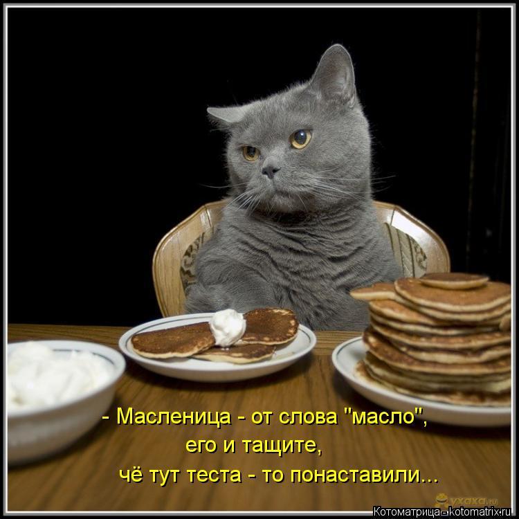 """Котоматрица: - Масленица - от слова """"масло"""", его и тащите, чё тут теста - то понаставили..."""
