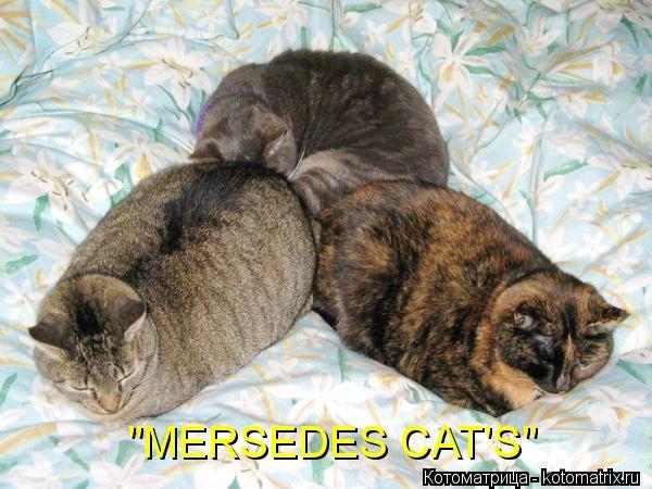 "Котоматрица: ""MERSEDES CAT'S"""