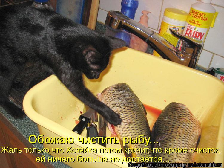 Котоматрица: Обожаю чистить рыбу... ей ничего больше не достается... Жаль только,что Хозяйка потом кричит,что кроме очисток,