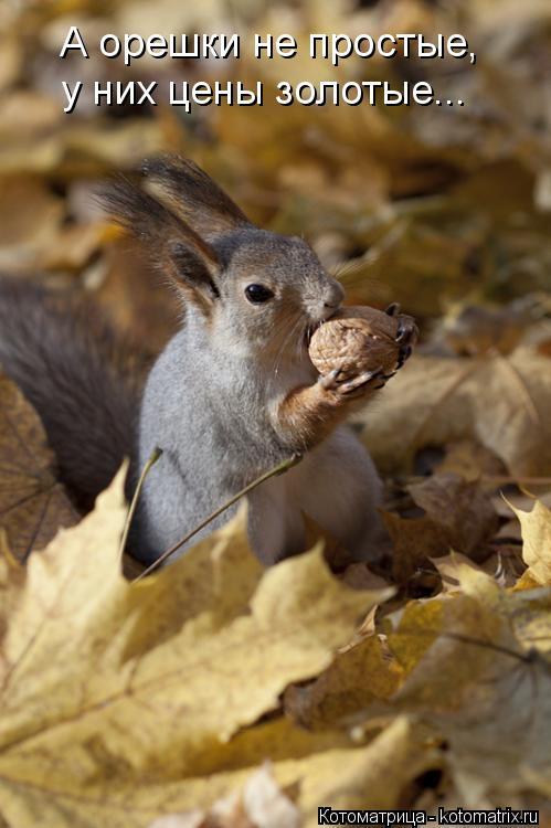 Котоматрица: А орешки не простые, у них цены золотые...