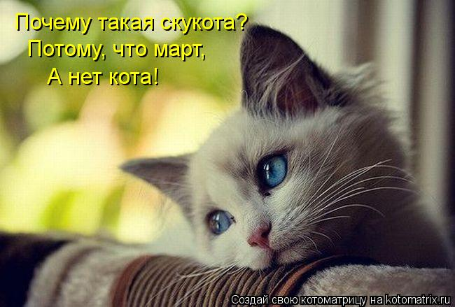 Котоматрица: Почему такая скукота? Потому, что март, А нет кота!