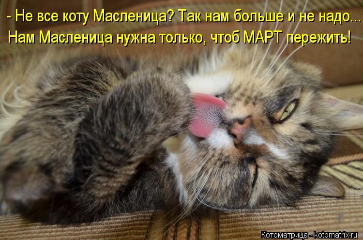 Котоматрица: - Не все коту Масленица? Так нам больше и не надо... Нам Масленица нужна только, чтоб МАРТ пережить!