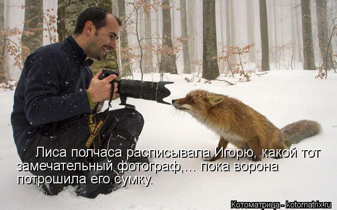 Котоматрица: Лиса полчаса расписывала Игорю, какой тот замечательный фотограф,... пока ворона  потрошила его сумку.
