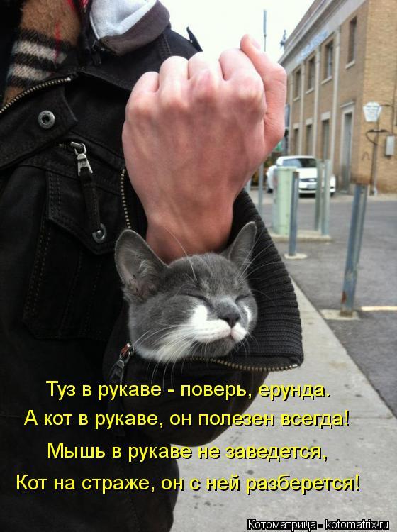 Котоматрица: Туз в рукаве - поверь, ерунда. А кот в рукаве, он полезен всегда! Мышь в рукаве не заведется, Кот на страже, он с ней разберется!