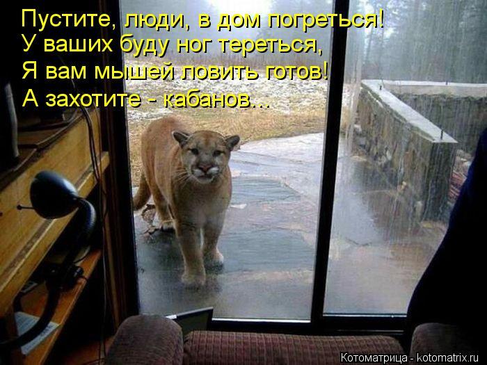 Котоматрица: Пустите, люди, в дом погреться! У ваших буду ног тереться, Я вам мышей ловить готов! А захотите - кабанов...