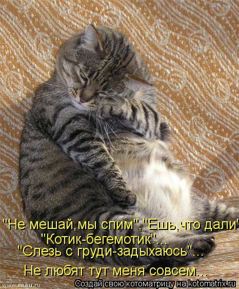 """Котоматрица: """"Не мешай,мы спим"""",""""Ешь,что дали""""... Не любят тут меня совсем... """"Котик-бегемотик""""... """"Слезь с груди-задыхаюсь""""..."""