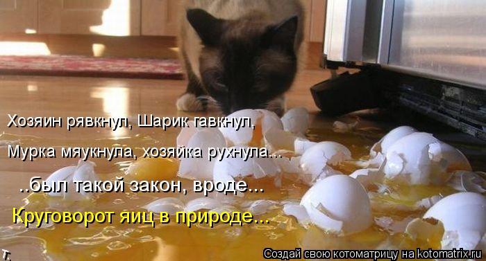Котоматрица: Хозяин рявкнул, Шарик гавкнул, Мурка мяукнула, хозяйка рухнула... ..был такой закон, вроде... Круговорот яиц в природе...