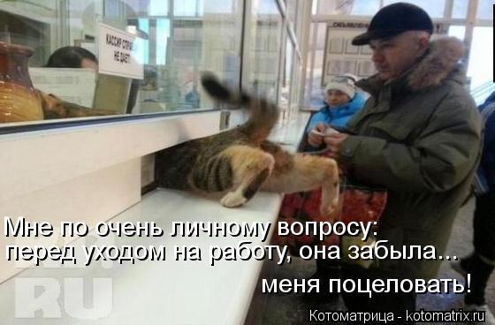 Котоматрица: Мне по очень личному вопросу:  перед уходом на работу, она забыла... меня поцеловать!