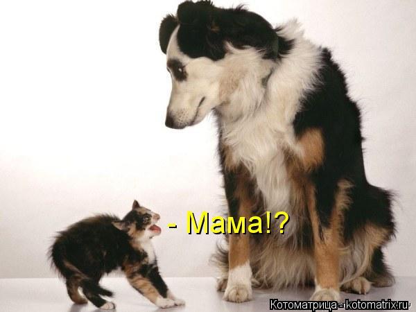 Котоматрица: - Мама!?