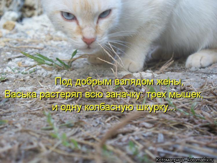 Котоматрица: Под добрым взлядом жены, Васька растерял всю заначку: трех мышек, и одну колбасную шкурку...