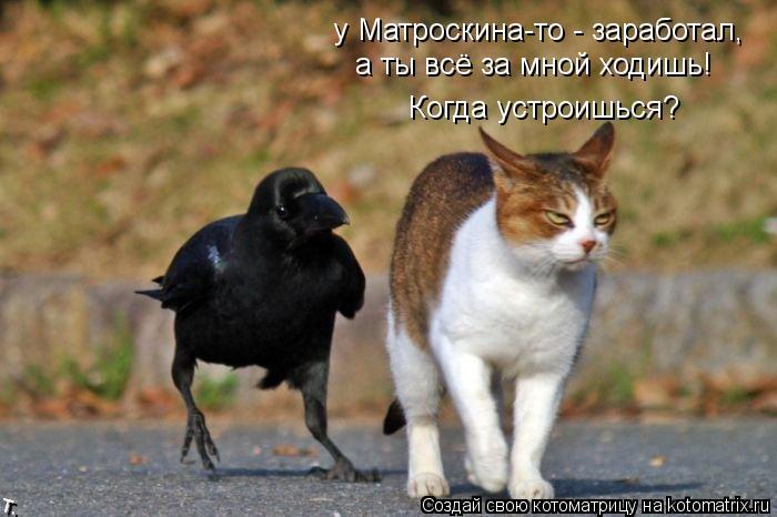 Котоматрица: у Матроскина-то - заработал, а ты всё за мной ходишь! Когда устроишься?
