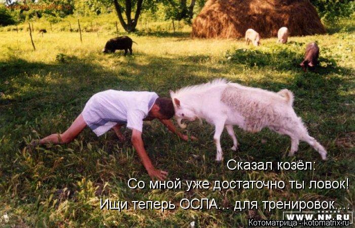 Котоматрица: Сказал козёл: Сказал козёл: Со мной уже достаточно ты ловок! Ищи теперь ОСЛА... для тренировок....