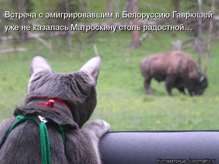 Котоматрица: Встреча с эмигрировавшим в Белоруссию Гаврюшей  уже не казалась Матроскину столь радостной…
