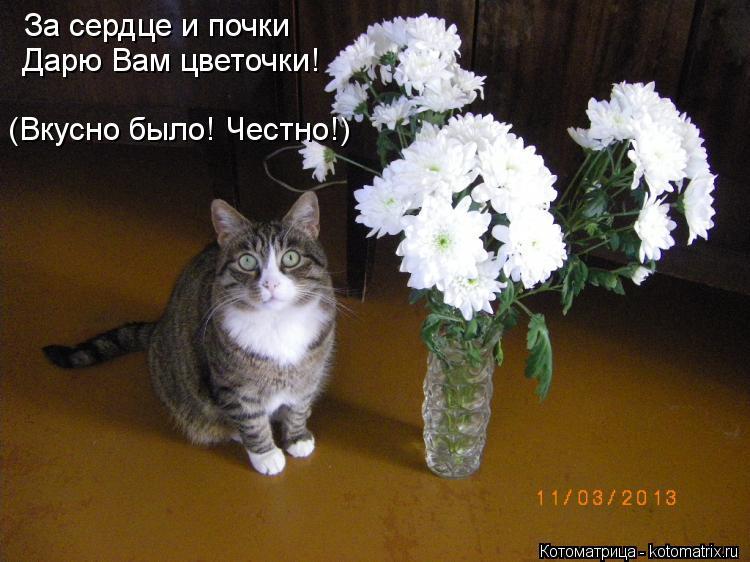 Котоматрица: За сердце и почки  Дарю Вам цветочки! (Вкусно было! Честно!)