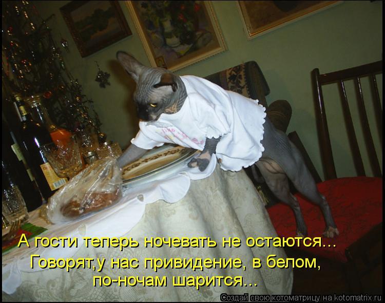 Котоматрица: Говорят,у нас привидение, в белом, по-ночам шарится... А гости теперь ночевать не остаются...