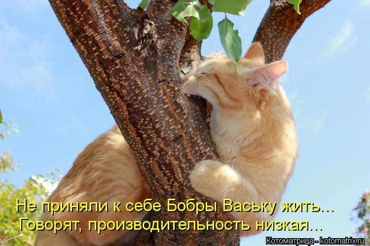 Котоматрица: Не приняли к себе Бобры Ваську жить... Говорят, производительность низкая...