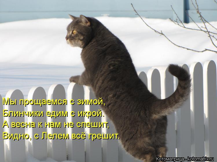 Котоматрица: Мы прощаемся с зимой, Блинчики едим с икрой. А весна к нам не спешит, Видно, с Лелем всё грешит.
